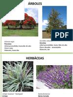Catálago Plantas y Sistema de Riego