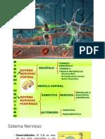 nervioso-2.pptx