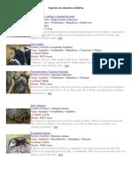 Especies en extinción.docx