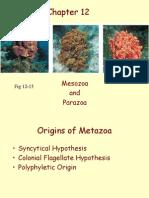 05 Chap 12 Sponges and Placozoa