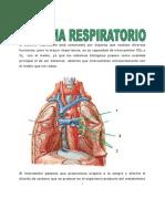 sistema_respiratorio_1.pdf