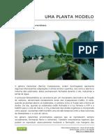 100_kalanchoe_planta_modelo.pdf