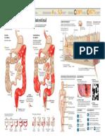 2011_enfermedad_inflamatoria_intestinal_copyright.pdf