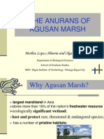 The Anurans of Agusan Marsh