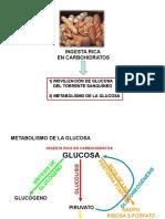 ciclokrebs