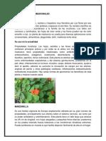 que                                                                                 son                                                                                 plantas                                                                                 medicinales.docx