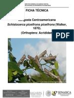 Control de Insectos Con Hogos