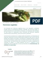 ¿Como Funcionan Las Hormonas en Las Plantas_ _ CANNA España
