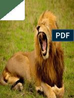 lion-692219_960_720.pdf