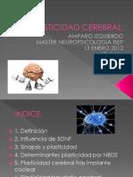 Plasticidad-Cerebral.pdf