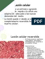 lesionymuertecelular wedfghjgkfdsdjfhg.pptx