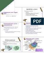 Endomembrane, organeli.pdf