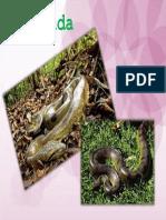 Animal de Peru