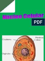 EL NUCLEO.ppt