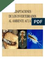 Adaptaciones de Los Invertebrados Al Ambiente Acuatico PPT