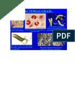Bacterias Hongo y
