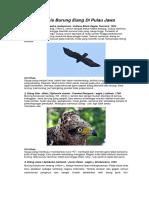 10 Jenis Burung Elang Di Pulau Jawa