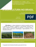 A Silvicultura No Brasil