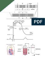 imagenes fisiologia.docx