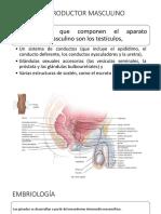 Aparato Genital Masculino.pptx