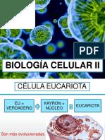 Semana 2 III Bim Biología Celular II