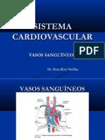 sistema cardiovascular  dr-18-ii.pptx