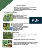 Las Plantas y Sus Utilidades