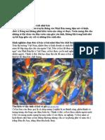 Bán Cá Koi Theo Phong Cách Nhật Bản