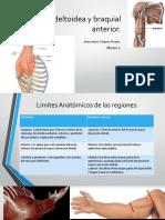 Región deltoidea y braquial anterior.pptx