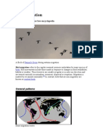 Bird Migration 2