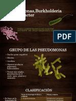 Pseudomonas, Acinetobacter y Burkholderia