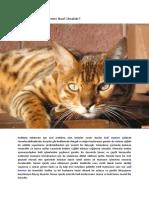 Kediler İçin Doğal Beslenme Nasıl Olmalıdır