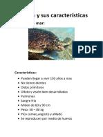 Tortuga y Sus Características