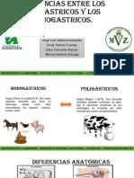 Diferencias Entre Mono & Poligastricos
