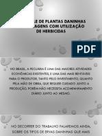 CONTROLE DE PLANTAS DANINHAS NA PASTAGENS COM UTILIZAÇÃO.pptx