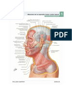 Atlas de Anatomia Humana Netter 6a Ed_booksmedicos.org