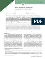 Aspectos celulares da cicatrização.pdf