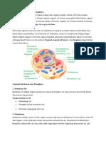 Organel Sel Hewan Dan Fungsinya