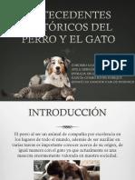 Presentación Clinica PERROS Y GATOS