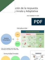 Relación entre la inmunidad innata y adaptativa