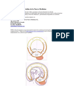 TABLAS DE ENFERMEDADES DE HAMER.pdf