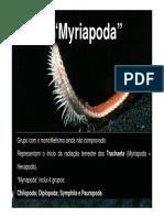 Myriapoda1 [Modo de Compatibilidade]