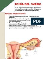 Anatomia Histologia y Hormonas Del Ovario