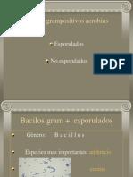 7. Bacilosgrampositivosaerobios 101215162856 Phpapp02