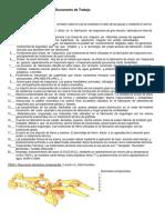 Cuestionario Chasis y Mandos Finales 1.docx
