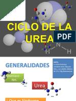 Ciclo Urea