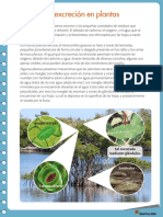 la excrecion en plantas.pdf