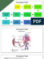 circulacion fetal.docx