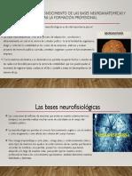 La Importancia Del Conocimiento de Las Bases Neuroanatomícas
