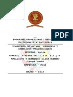camelidos-sudamericanos JUNIOR.docx